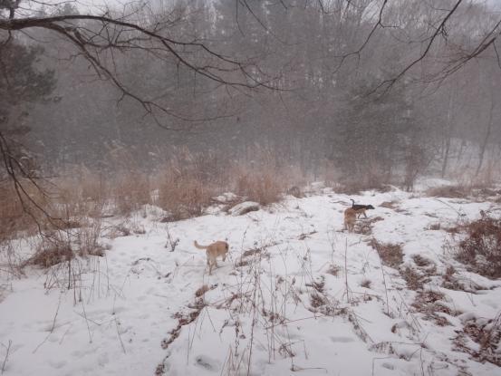 積った雪は好きだけど_f0064906_15433120.jpg
