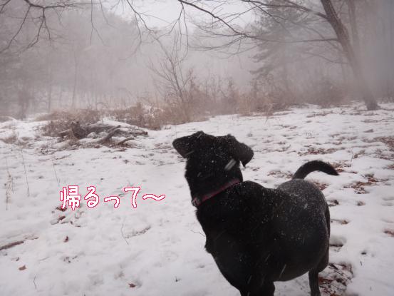 積った雪は好きだけど_f0064906_1545567.jpg