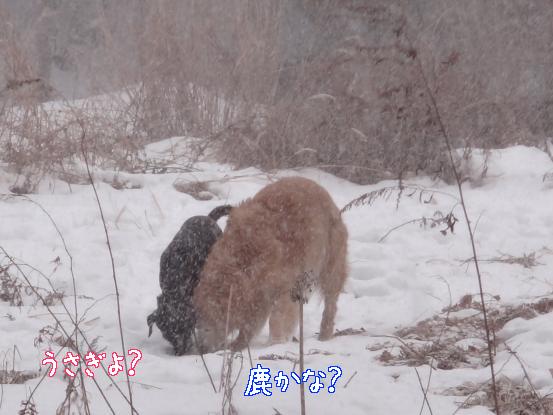 積った雪は好きだけど_f0064906_15464750.jpg