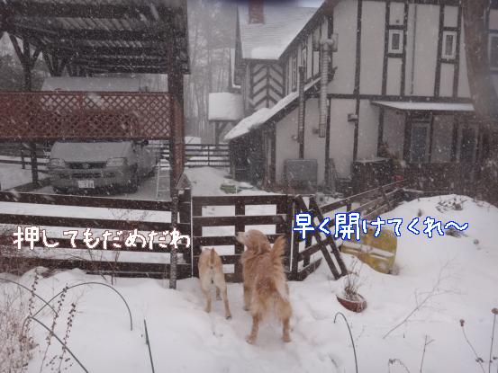 積った雪は好きだけど_f0064906_15481398.jpg