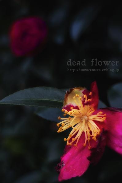 花とともに_f0100215_23293918.jpg