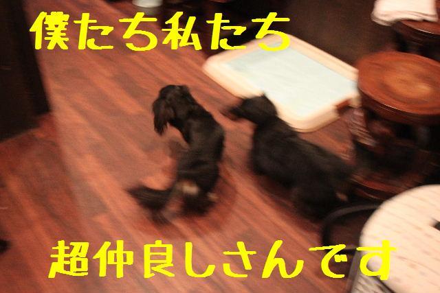 b0130018_140435.jpg