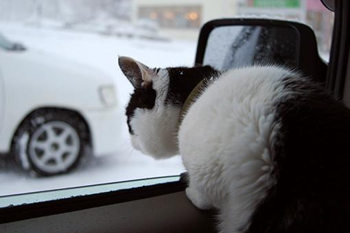 雪の日の朝帰り_b0259218_1155212.jpg