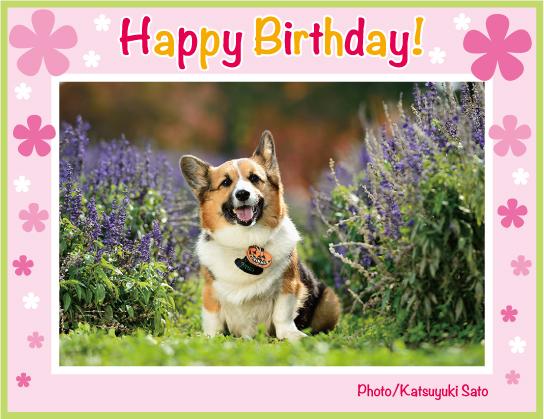 アタ坊ちゃん、お誕生日おめでとう♪_d0102523_164533.jpg