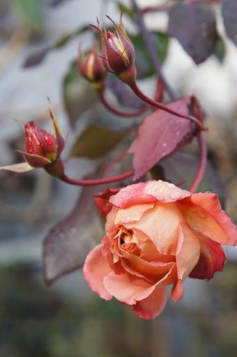 レッスンのお花は春。_f0155431_222823.jpg