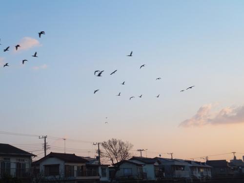 水鳥は寒くても元気.....河川散歩!_b0137932_922367.jpg