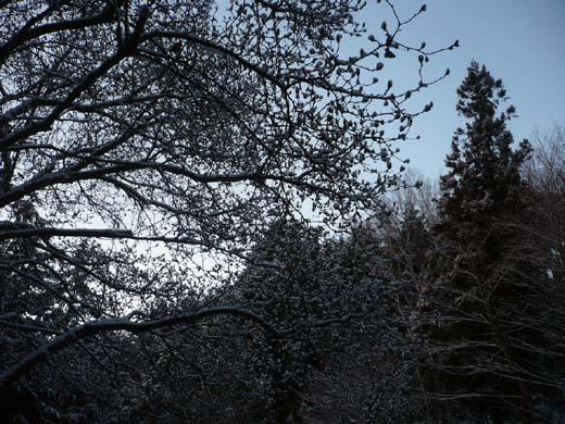 雪空_d0127634_1443247.jpg