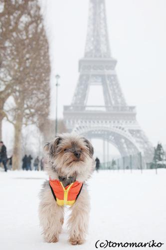バブー、雪のじゅうたん走るっ!_c0024345_6363655.jpg