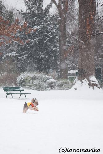 バブー、雪のじゅうたん走るっ!_c0024345_6365424.jpg