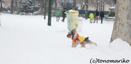 バブー、雪のじゅうたん走るっ!_c0024345_6372153.jpg