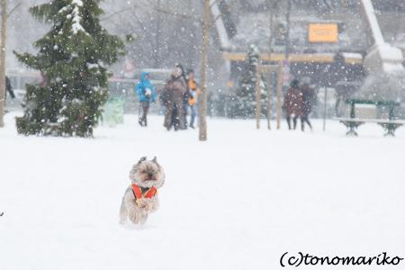 バブー、雪のじゅうたん走るっ!_c0024345_6373467.jpg