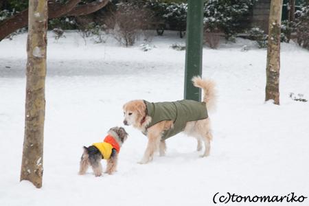 バブー、雪のじゅうたん走るっ!_c0024345_637821.jpg