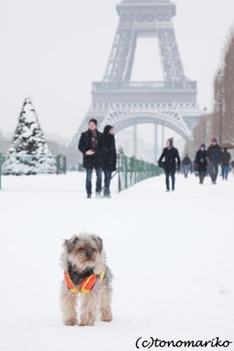 バブー、雪のじゅうたん走るっ!_c0024345_638381.jpg