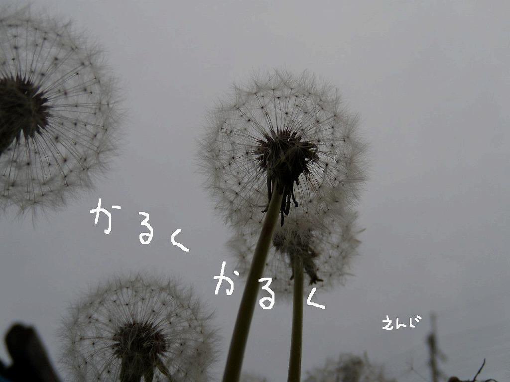 d0165772_20323980.jpg