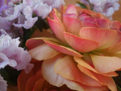 オークリーフ(ラナンキュラスの花束)_f0049672_17183165.jpg