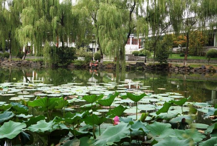 北京大学勺海_c0182775_219012.jpg