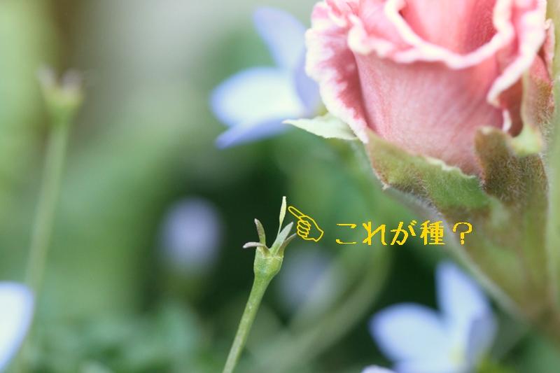 f0165677_17593361.jpg