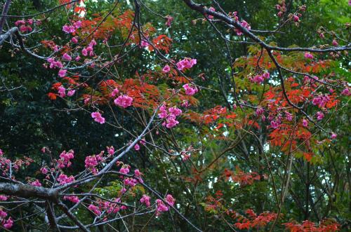 秋と春のコラボ_e0028387_2203373.jpg