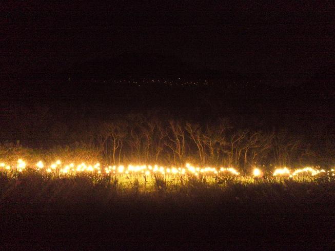 森を照らす灯り_a0247891_0371853.jpg