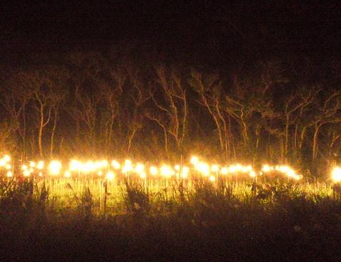 森を照らす灯り_a0247891_0411644.jpg