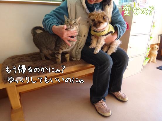 ヤクぎれ_f0064906_16201753.jpg