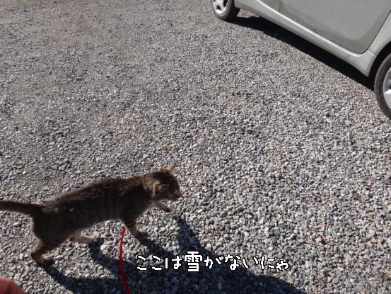 ヤクぎれ_f0064906_1629217.jpg