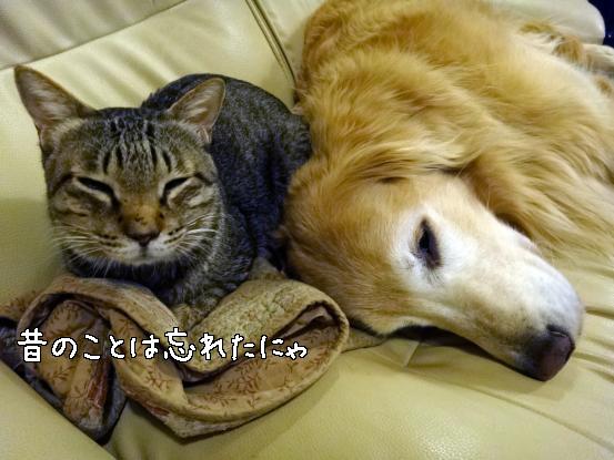ヤクぎれ_f0064906_1656163.jpg
