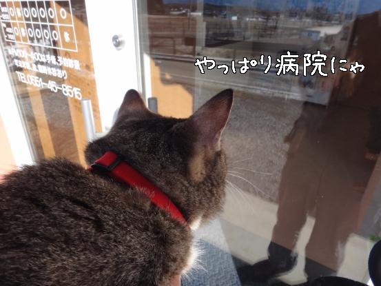 ヤクぎれ_f0064906_1675885.jpg