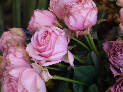 お花ツアー。_b0116313_22414543.jpg