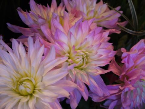 お花ツアー。_b0116313_22443362.jpg
