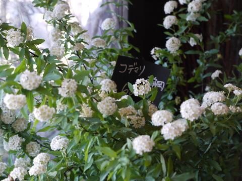 お花ツアー。_b0116313_2248339.jpg