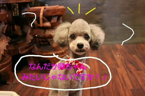 b0130018_20111782.jpg