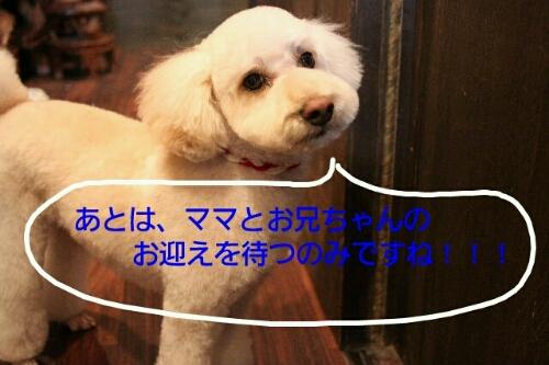b0130018_20141757.jpg