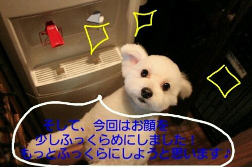 b0130018_2237306.jpg