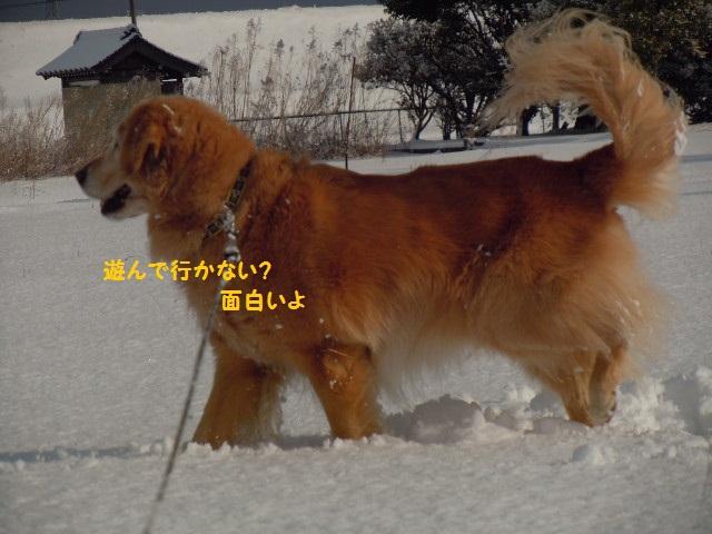 f0114128_1827101.jpg