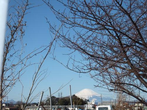 春は近い....もうすぐ梅の花が咲く!_b0137932_12352955.jpg