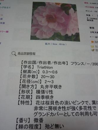 b0237655_231515.jpg