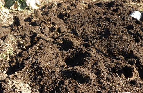 芽キャベツの収穫_c0053863_21541992.jpg