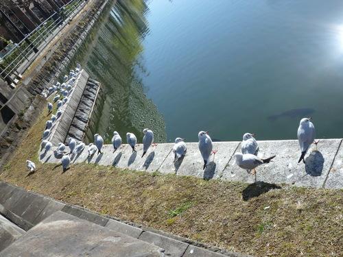 皇居東御苑散歩♪_c0100865_23194762.jpg