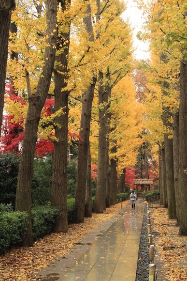 SKY131103 黄葉・紅葉がきれいに自然美を作ります。_d0288367_6204015.jpg