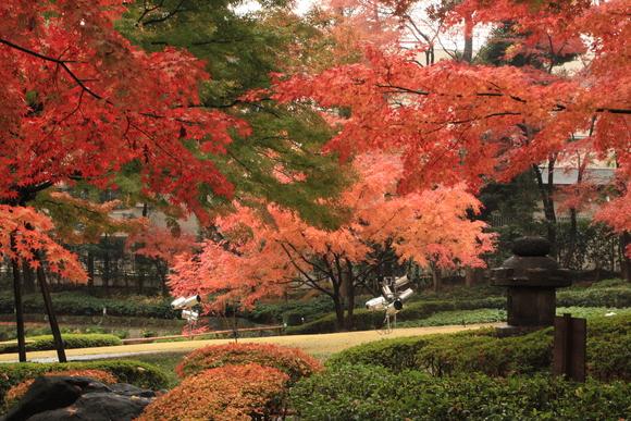 SKY131103 黄葉・紅葉がきれいに自然美を作ります。_d0288367_6305726.jpg