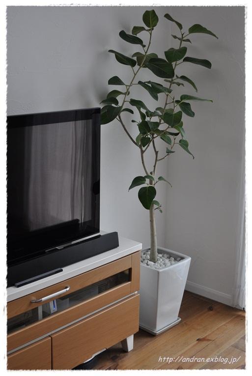 リビング TVと観葉植物_c0176271_02287.jpg