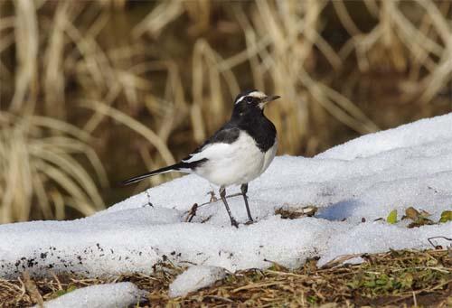 雪と小鳥_e0167571_22542473.jpg