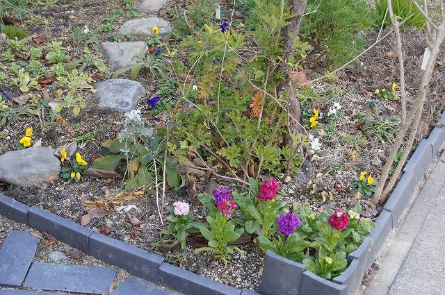 ビオラの花数が増えました_e0181373_20581143.jpg