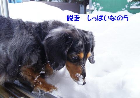 f0195891_1651455.jpg