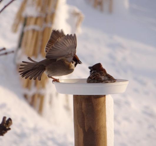 この頃の雀ちゃん、餌台を高くすること・・_a0136293_15582658.jpg