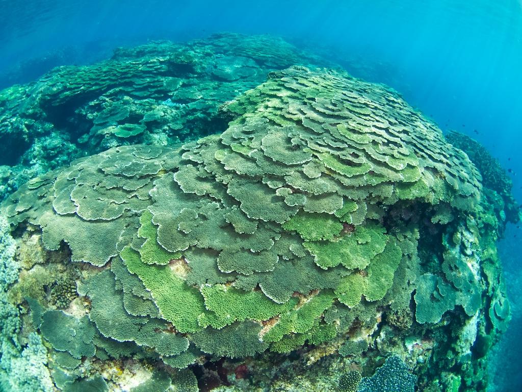 1/26 サンゴ調査_a0010095_1734326.jpg