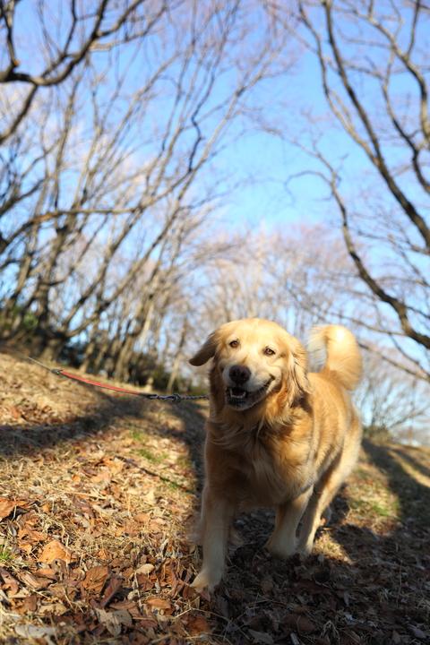 お散歩日和_b0275998_20293470.jpg