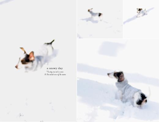 二度目の雪と、雪だるま。_d0174704_2231561.jpg