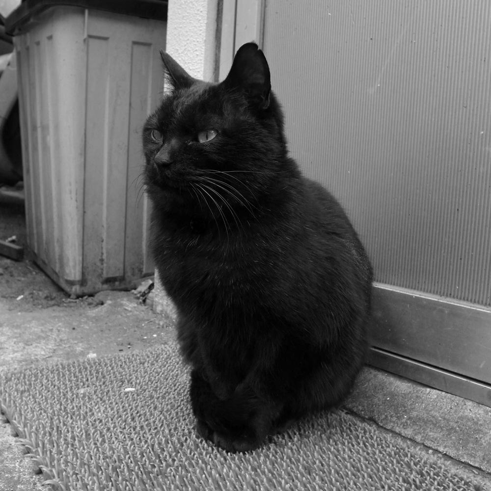 黒猫_e0004009_1555491.jpg